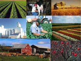 agri-collage2